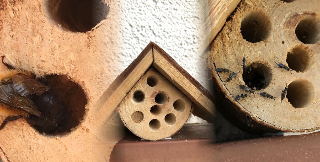 Wildbienen schützen CSR Blog Vohrmann CSR Consulting